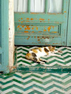 green and white chevron tiles, great door, and one cute calico kitty--whose orange spots even match the distressed door.is it true that calico cats are always female? Lost her brother, Moo.