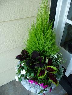 Lemon cypress, coleus, and impatients Patio Planters, Fall Planters, Flower Planters, Flower Pots, Container Flowers, Container Plants, Container Gardening, Balcony Garden, Garden Pots