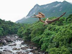 #流木 #流木アート #流木の鳥 #金澤尚 #屋久島アート     濃霧の先を目指して鳥は飛ぶ、 虹が出れば虹の彼方を目指して又羽ばたく、 寒くなれば暖を求めて地球を巡る、 永い旅路を経たおまえ、おまえは流木の鳥、 先ずは屋久島の森へ戻っておいで。 driftwood art object #8-2011-6