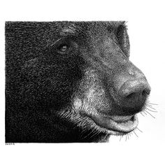 Flickr: The Wild animal drawings Pool