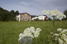 Sport- Wellnesshotel Bichlhof auf der sonnigsten Seite Kitzbühels