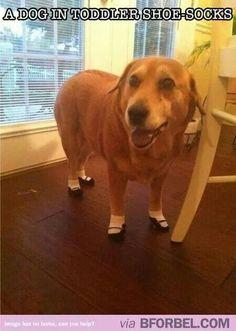 A dog in toddler shoe socks.
