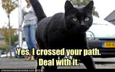 Haha, I love this! I don't know why people have to hate on black cats...