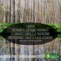 L'importanza degli alberi #foresty #reforesty #pianetaforesty #alberi #foreste #sostenibilità #co2