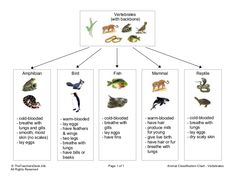 Vertebrates                                                (with backbone)       Amphibian              Bird                Fish                Mammal         …
