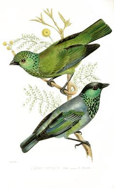 The Graffical Muse: Green birds