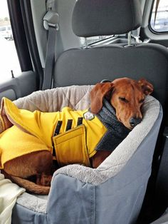 Travel Bed that's Safe for your dog in the Car // Ammo the Dachshund - I need to find this travel dog bed Dog Car Accessories, Dog Car Seats, Dog In Car, Car Dog Bed, Weenie Dogs, Doggies, Dachshund Love, Daschund, Dog Supplies