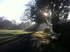 iPhoneography - park in the morning