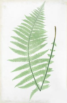 MOORE (THOMAS) The Ferns of Great Britain and Ireland... edited by John Lindley... Nature-printed by Henry Bradbury, Bradbury and Evans, [1855]-1857