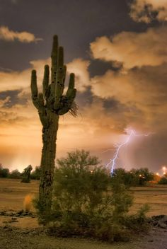 ✮ A lone Saguaro Cactus waiting for the approaching monsoon storm
