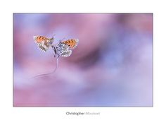 Butterfly by Christopher Mouisset on 500px