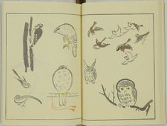 kitao-masayoshi-illustrated-animals (8)
