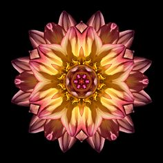 Flower Mandala Red And Yellow Dahlia I Flower Mandala Pink Abstract 5d Diamond Painting