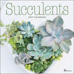 Succulents are grown as ornamental plants because of their striking and unusual appearance. Enjoy a year of architectural, water-wise succulents in a wide variety of appealing settings in Succulent…