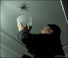 spider celiing