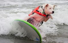 Funny Surfing Dogs - On The Wave (21)