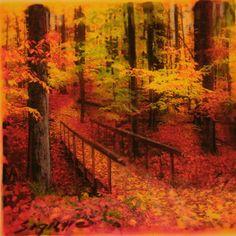 Autumn Footbridge