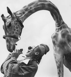 Circus clown, Lou Jocobs and Giraffe Loomis Dean 1952 Life Magazine http://loomisdeanphotography.com/index.php/image-license-form-confirm/?product_id=1575
