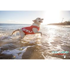EzyDog's Rash Vest is the perfect way for your dog to have safe fun in the sun.  With 50+ UV sun protection, the EzyDog Dog Rash Shirt is the perfect accessory on hot sunny days.     Made using quality, high visibility lycra for a stretch fit and fast drying, odour resistant, easy to wash fabric.