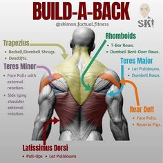 The Dumbbell Workout Plan Part Chest And Back BUILD-A-BACK!⠀First off lets start off with a lot of these exercises are going to overlap since there's a few exercise that basically hit the whole entire back, one being the deadlift since it almost Dumbbell Workout Plan, Sixpack Workout, Gym Workout Tips, Weight Training Workouts, Workout Plans, Lat Workout, Deltoid Workout, Full Leg Workout, Traps Workout