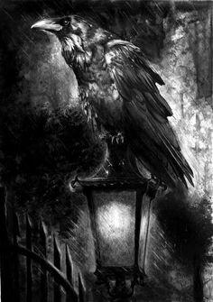 Raven on latern
