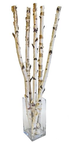 Interesting Grouping Of Birch Tree Branches For The