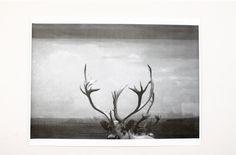 Antlers Poster via Moorea Seal