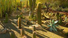 Desert Botanical Garden in Phoenix, Arizona   Expedia
