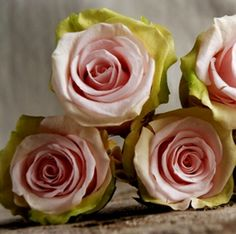 Preserved Natural Bi-color Pink & Lime Green Roses (9 rose heads)