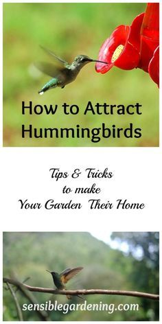 How to Attract Hummingbirds with Sensible Gardening.