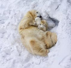 Adorable Baby Polar Bear Photography