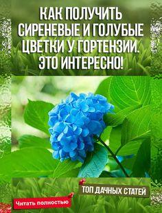 Это будет Вам интересно - Как получить сиреневые и голубые цветки у гортензии. Это интересно. #растения #сад Rockery Garden, Garden Paths, Organic Gardening, Gardening Tips, Types Of Houseplants, Pink Houses, Tropical Garden, Flower Beds, Hydrangea