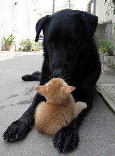 Bisou d'un Chien et d'un Chat