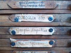 Material científico, armarios de preparaciones histológicas