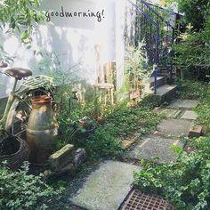 . 頑張れば爽やかpicも撮れるのである♪ . #antique #vintage #garden #junk #autumn #morning #green #gardening #flower #ガーデン #ガーデニング #庭 #錆び #サビ #ジャンク #古道具 #アンティーク #ヴィンテージ #暮らし #朝 #花のある暮らし #秋