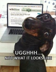 Dachshund, Labrador Retriever, Puppy, Hot dog, Cat, Image, Funny animal, Humour: wikiHow UGGHHH NOT WHAT IT LOOKS LIKE