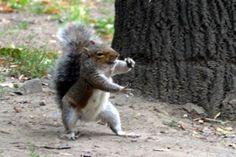 Squirry Karate-ka *.*