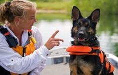 There are few German shepherd training commands which are necessary to train your puppy