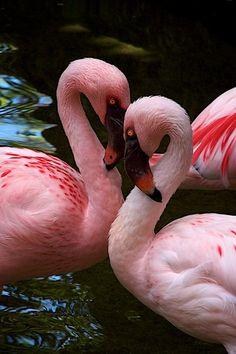 Heart Flamingos  byDon Sullivan