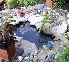 How to keep pond water clear without using chemicals.