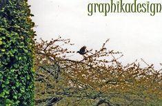 Portfolio Multimedeia: Lähikuvassa luonto: pitkäkärsäiset perhoset, ja tietysti leppäkertut Ex Libris, Culture Travel, Ecology, Travel Photos, Bond, Artwork, Plants, Work Of Art, Travel Pictures