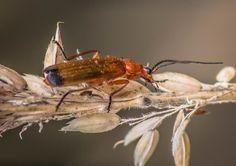Bug | by nickcoburn62