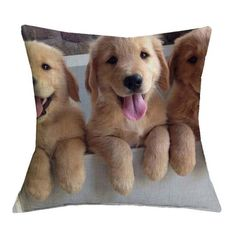 14 signs you are a crazy golden retriever person funny animals cute animals, Golden Retriever Mix, Retriever Puppy, Funny Golden Retrievers, Animals And Pets, Baby Animals, Funny Animals, Cute Animals Puppies, I Love Dogs, Cute Dogs
