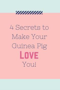 4 Secrets to Make Your Guinea Pig Love You!