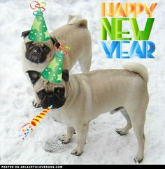 happy pug new year from the two cutest pugs happy pug
