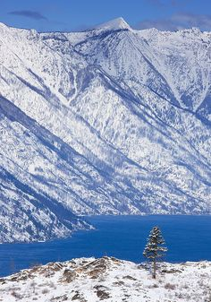 Pyramid Peak and Tree, Lake Chelan, Washington State - at 55 miles in length, the longest natural lake in WA
