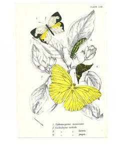 Antique Butterflies Print Art Housewares by PeonyandThistlePaper, £20.00
