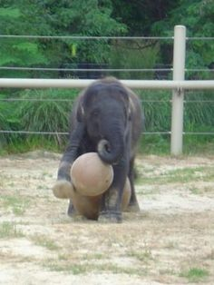 Sweet Baby Elephant - 38 Cute Baby Animals