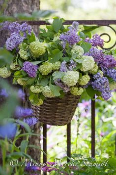 beautiful basket of hydrangeas