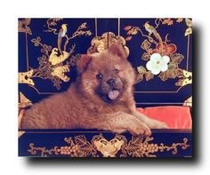 Jazz up your room wall with this poster is extremely beautiful poster, captures the image of a very cute and adorable dog looking at you and his innocent face attracts everyone towards it and the art behind the dog is sure to wow guests. This poster is perfect for the modern home decor style. We ensure the high degree of quality and color accuracy.